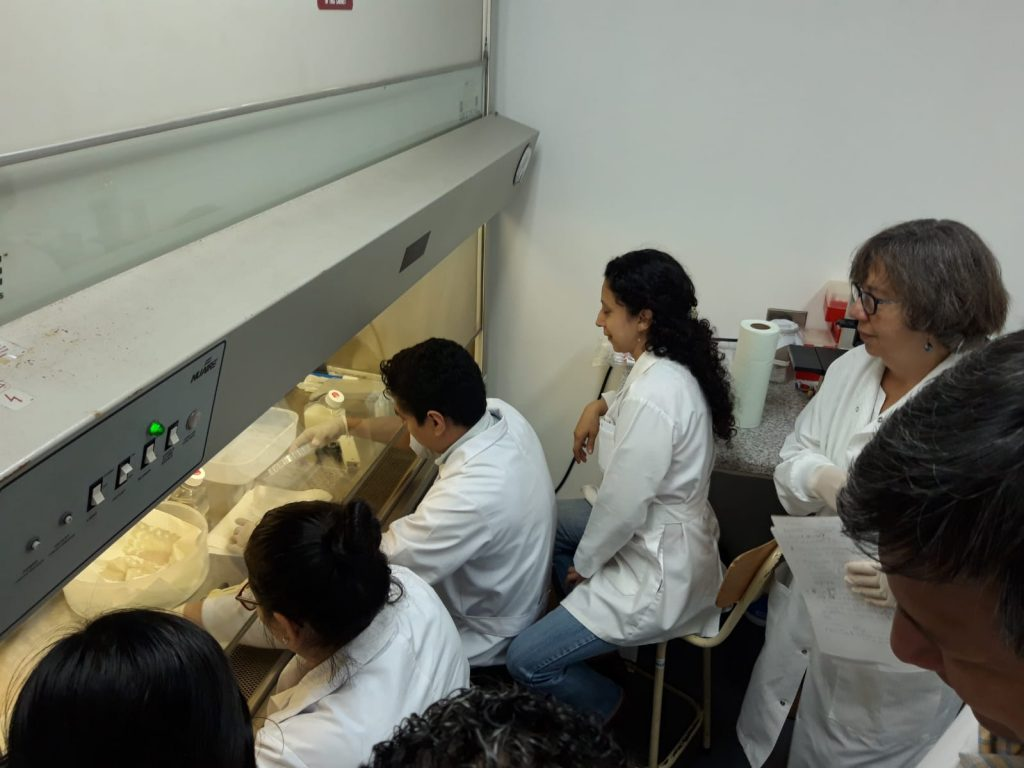 Trainees work in a lab in Nicaragua through the NEED D43 Program